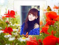 火红罂粟花照片合成