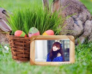 兔子,青草,木制相框照片合成