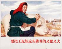 养猪标语宣传画制作